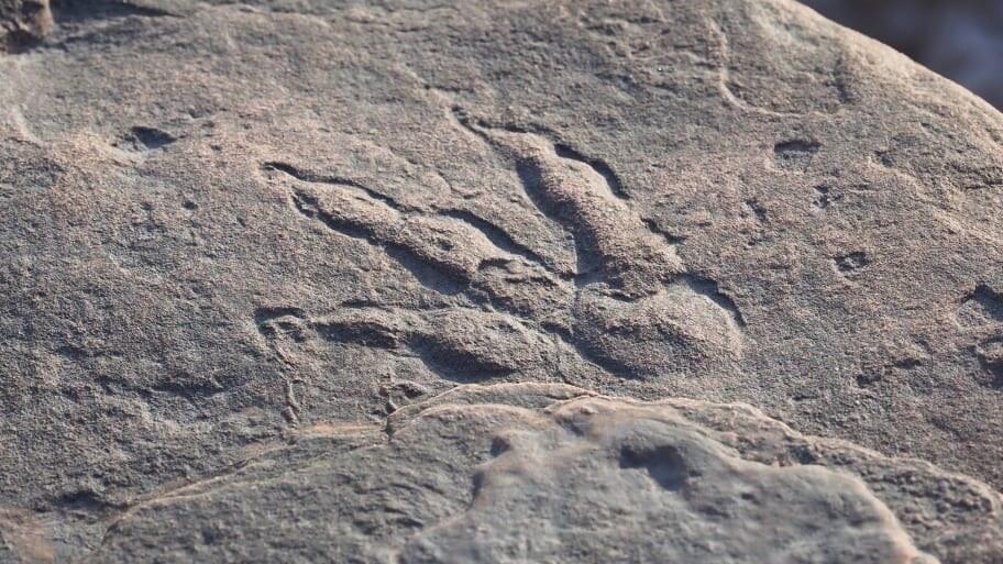 Pegada de dinossauro incrivelmente preservada descoberta por criança de 4 anos