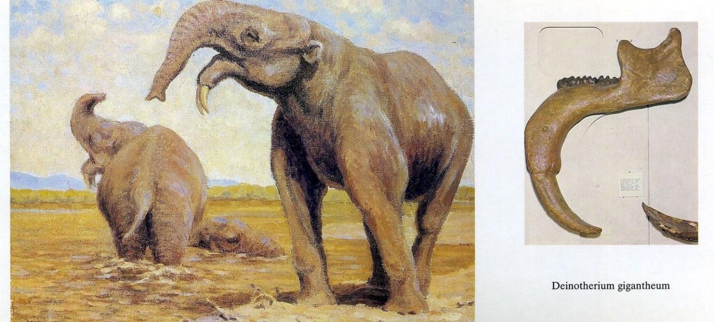 Dinâmica climática global impulsionou o declínio de mastodontes e elefantes, sugere novo estudo