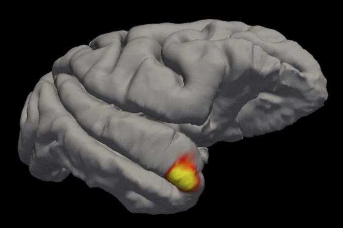 Cientistas descobrem uma nova classe de células de memória no cérebro